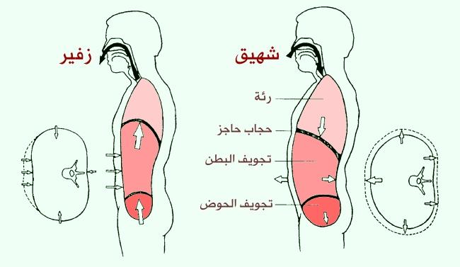 وفاء تطريز مناورة الم في منتصف القفص الصدري عند التنفس العميق Comertinsaat Com