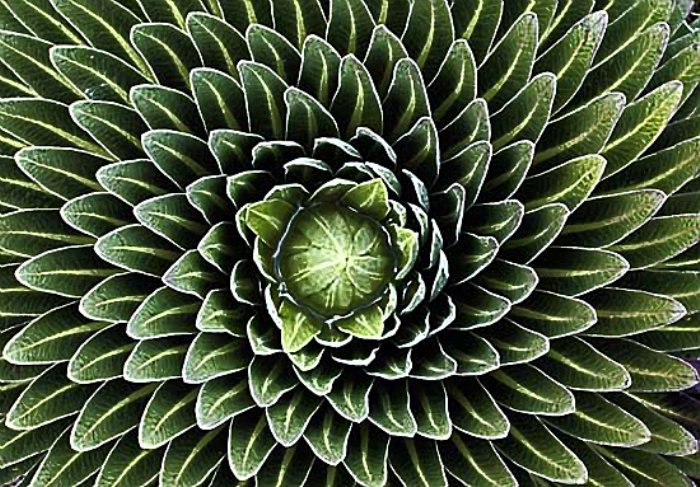http://www.alaalsayid.com/images/articles/Fibonacci/Fibonacci%20sequence%20in%20nature.jpg