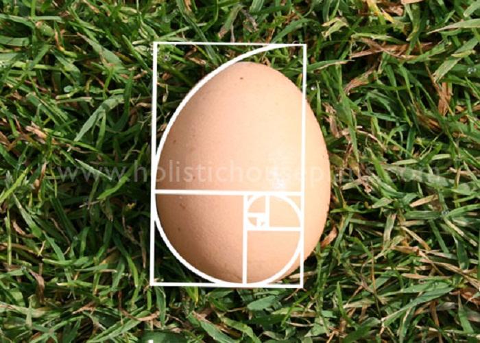 http://www.alaalsayid.com/images/articles/Fibonacci/egg-golden-spiral.jpg