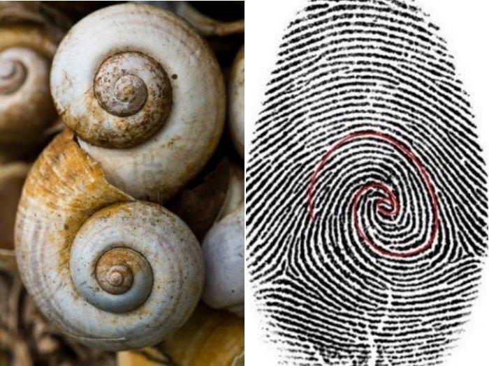 http://www.alaalsayid.com/images/articles/Fibonacci/fibonacci%20spiral.jpg