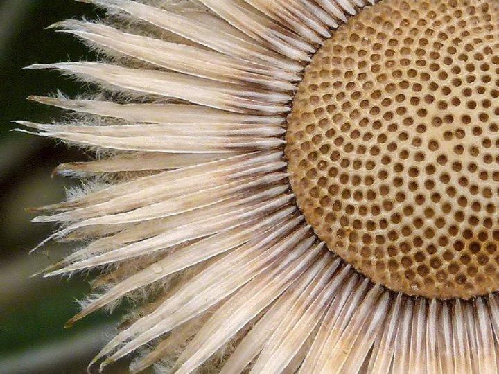 http://www.alaalsayid.com/images/articles/Fibonacci/spiral%20sidpix.jpg