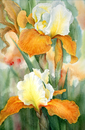http://www.baytalhaq.com/images/articles/Orange_Iris_by_louise_art.jpg