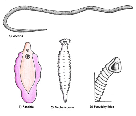 http://www.alaalsayid.com/images/articles/Parasitess.jpg