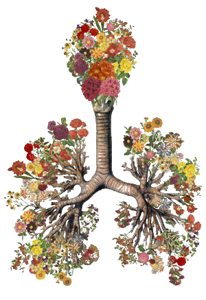 http://www.alaalsayid.com/images/articles/lungs/love%20lungs-web.png