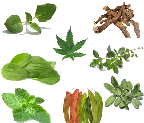 http://www.alaalsayid.com/images/articles/lungs/lung%20herbs.png