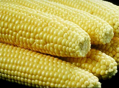 http://www.alaalsayid.com/images/articles/nowheat/GMO%20corn.jpg