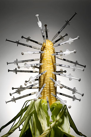 http://www.alaalsayid.com/images/articles/nowheat/GMO-CORN-needles.jpg