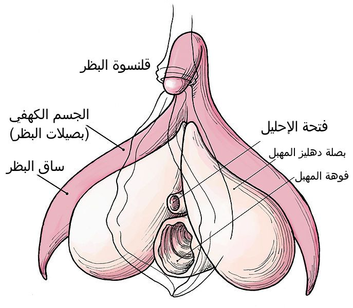 http://www.alaalsayid.com/images/articles/woman%20full/vag2.jpg